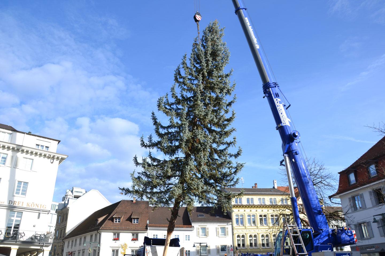 Neuregelung für die Weihnachtsbäume im Lörracher Stadtgebiet - meinWiesental.de / Kommuanles