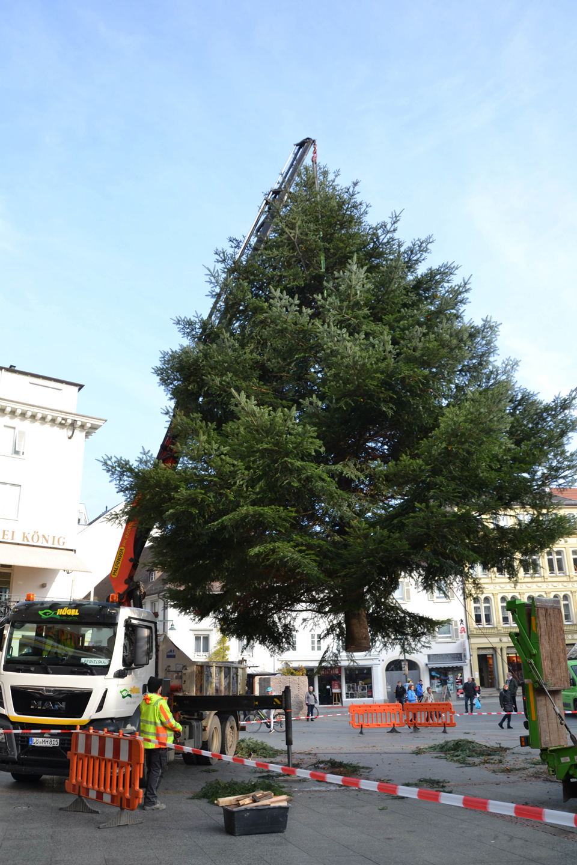 Weihnachtsbaum auf dem Alten Markt - meinWiesental / kommunales